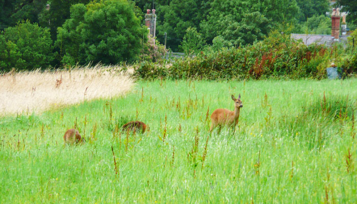 Holiday Cottage View of Deer